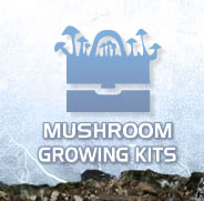 Mushroom Growing Kits